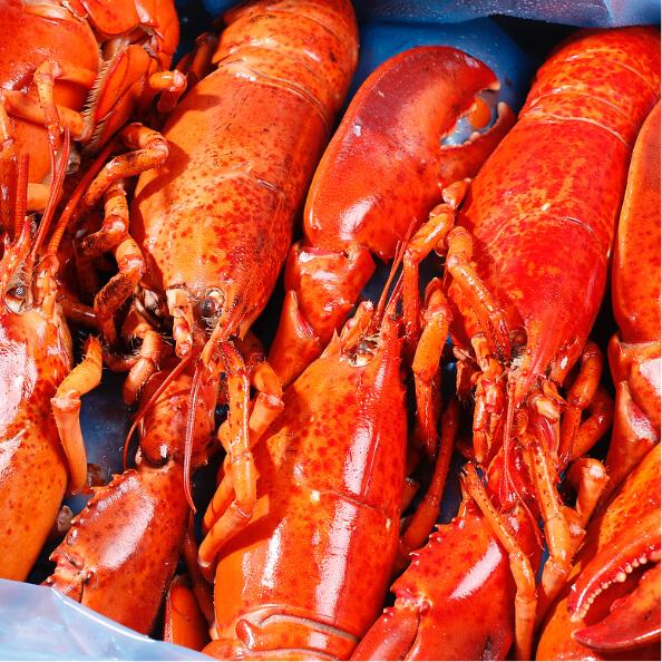 Bulk cooked lobster culls